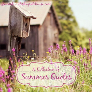 Collection of Summer Quotes